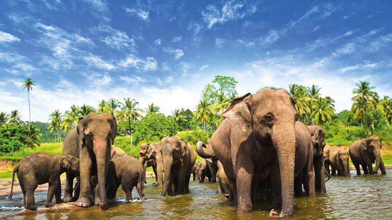 تور  سریلانکا ( کندی + کلمبو + بنتوتا )