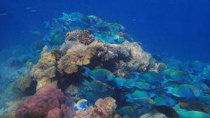 صخره های مرجانی در معرض خطر جاذبه های گردشگری مالدیو