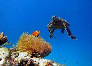 لاکپشت های در معرض خطر در جاذبه های گردشگری مالدیو