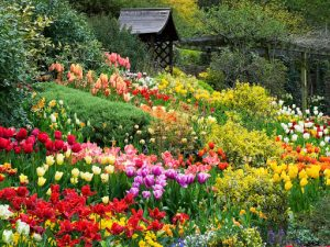 جشنوازه گل دالات ویتنام