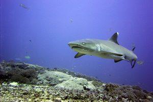 نقطه شارک در جزیره گیلی