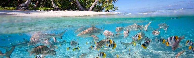فصل سفر به مالدیو